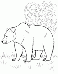 A bear walks in the woods