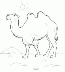 A camel walking in the desert