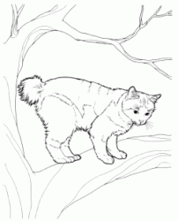 A cat on the branch