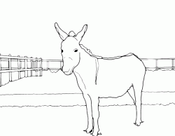 A donkey in the fence