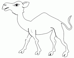 A dromedary walking in the desert