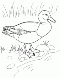 A duck on the shore