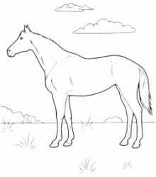 A horse on the prairie