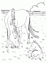A horse with her foal into the fence