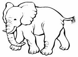 A little elephant