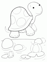 A little turtle
