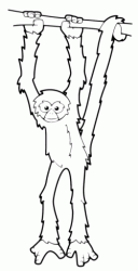 A monkey hanging on the branch