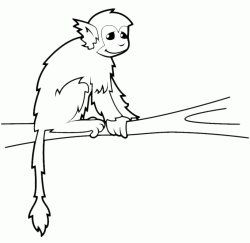 A monkey on a branch