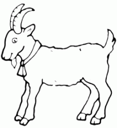 A nice goat