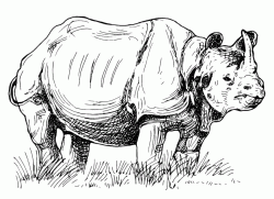 A rhino in the african bush