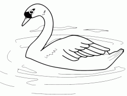 A swan in the pond
