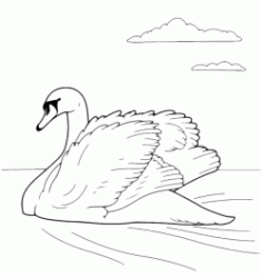 A swan swimming in lake