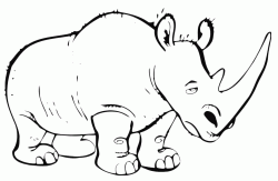 A tired-looking rhinoceros