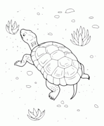 A turtle walking slowly