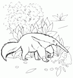 Anteater searches for food in the woods