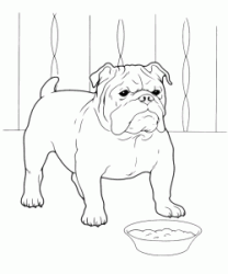 English Bulldog in front of his bowl