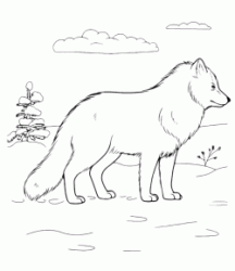 Samoyed breed