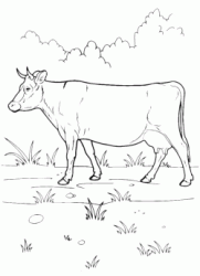 The cow grazing