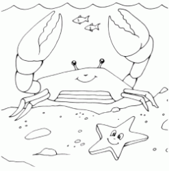 The crab with the starfish