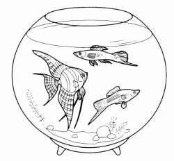 The fish in glass ball