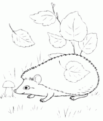 The hedgehog sniffs a mushroom