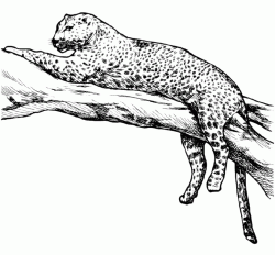 The leopard rests on the branch