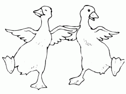 Two ducks are dancing
