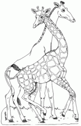 Two giraffes dance