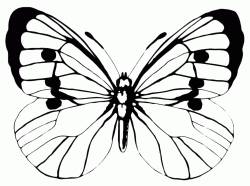A butterfly with open wings