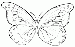 A butterfly with two giant wings