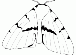 A butterfly with very large wings