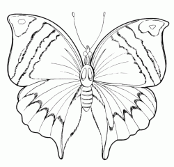 A butterfly with wings with a special design