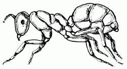 A design of an ant