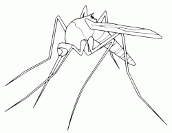 A mosquito with a big sting