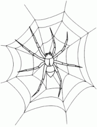 A spider on the spider web