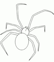 A spider with a big belly