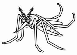 An angry mosquito