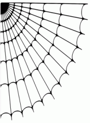 An empty spider's web