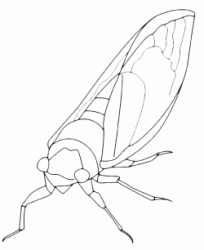 An insect similar to a moth