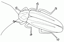 An insect with long antennas