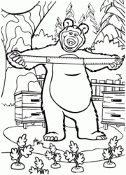 The Bear measure by the yardstick carrots