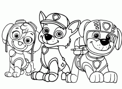 Three members of the Paw Patrol Skye Rocky and Zuma